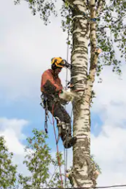 tree branch removal service